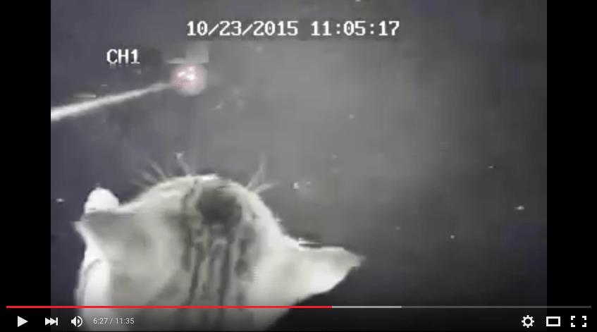 Bildschirmfoto 2015-12-10 um 02.11.52